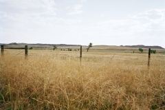 SD - Tumbleweeds in Landscape - Rapid City08-24-2013